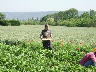 Blog de producteur78670 page 9 g a e c vergers brousse for Conseil jardinage